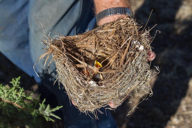 Al holding a bluebird nest.