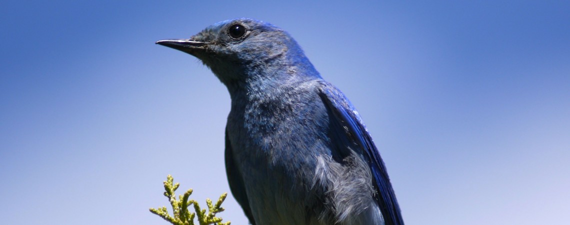 Bluebird Man nominated for an Emmy Award!